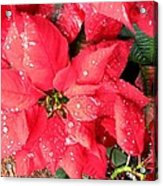 Diamond Encrusted Poinsettias Acrylic Print