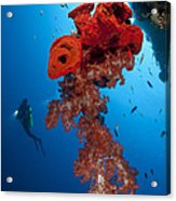 Diver Looks On At A Bright Red Soft Acrylic Print by Steve Jones