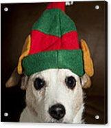 Dog Wearing Elf Ears, Christmas Portrait Acrylic Print