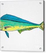 Dolphin Fish Acrylic Print