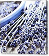 Dried Lavender Acrylic Print