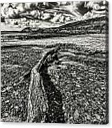 Driftwood Mono Acrylic Print