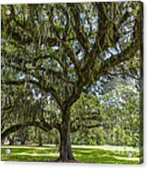 Dripping With Spanish Moss Acrylic Print