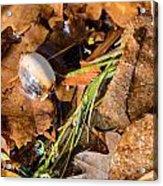 Dry Acorn And Oak Leaves Acrylic Print
