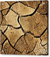 Dry Land Acrylic Print