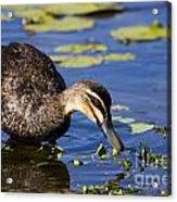 Duck Hunt Acrylic Print