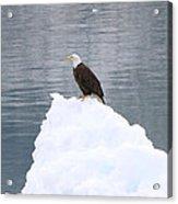 Eagle On Ice Acrylic Print