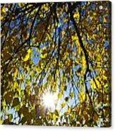 Early Autumn  Acrylic Print