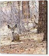 Easter Does Acrylic Print