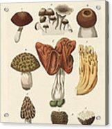 Eatable Mushrooms Acrylic Print