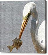 Egret Eats Fish Acrylic Print