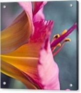 Enchanting Florals Acrylic Print