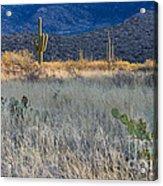 Engelmanns Prickly Pear Cactus Acrylic Print