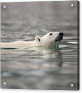 Europe, Norway, Svalbard Acrylic Print