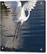 Everglades Acrylic Print