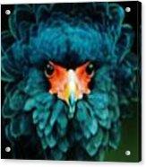 Exotic Birds Acrylic Print