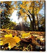 Fall Autumn Park. Falling Leaves Acrylic Print