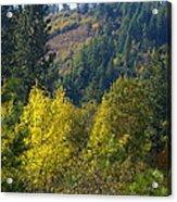 Fall In Spokane Acrylic Print