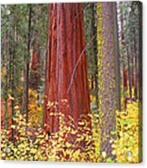 Fall In The Forest Acrylic Print