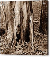 Fall Leaves V I Acrylic Print