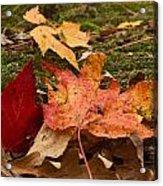 Fall Moss Carpet Acrylic Print