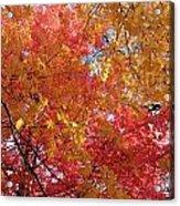 Fall Saint Louis 1 Acrylic Print