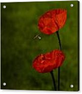 Fauna And Flora Acrylic Print