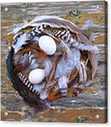 1. Feather Wrath Example Acrylic Print