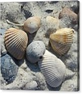 Fernandina Shells  Acrylic Print