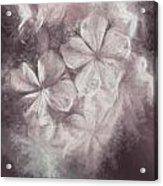 Fibonacci Flowers In Energy Manipulation Calculus Acrylic Print