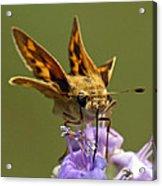 Fiery Skipper Butterfly Acrylic Print