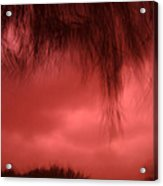 Film Noir Homage Blood Simple 1984 Hanging Tree Branches Casa Grande Arizona 2005 Acrylic Print