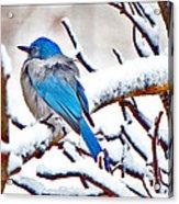 First December Snow Acrylic Print