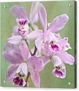 Five Beautiful Pink Orchids Acrylic Print