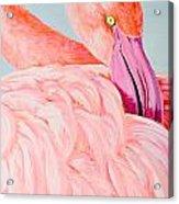 Female Flamingo In The Bahamas Acrylic Print