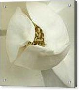 Flora Closeup Acrylic Print