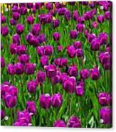 Floral Art Vi Acrylic Print