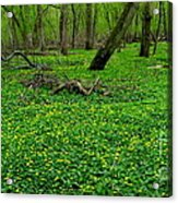 Floral Forest Floor Acrylic Print