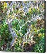 Florida Scrub Oaks Painted  Acrylic Print