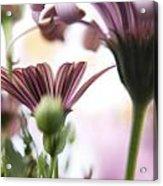 Flower Background Acrylic Print