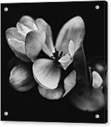 Flower Fine Art  Acrylic Print