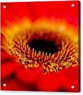 Flower Macro 1 Acrylic Print