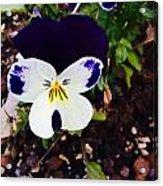 Flower Acrylic Print by Niki Mastromonaco