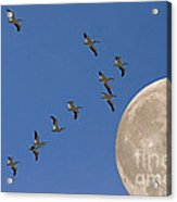Flying To The Moon Acrylic Print