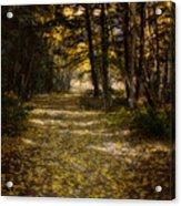 Follow The Light Acrylic Print