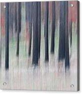 Forest Floor Acrylic Print