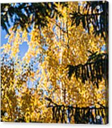 Forest Tale - Featured 3 Acrylic Print