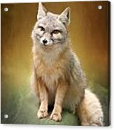 Foxes Acrylic Print