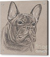 French Bulldog - Snickers Acrylic Print