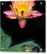 Frog And Waterlily Acrylic Print